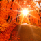 El otoño y las flores